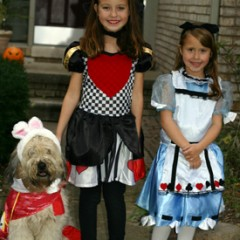 white rabbit dog costume, queen of heart and alice in wonderland