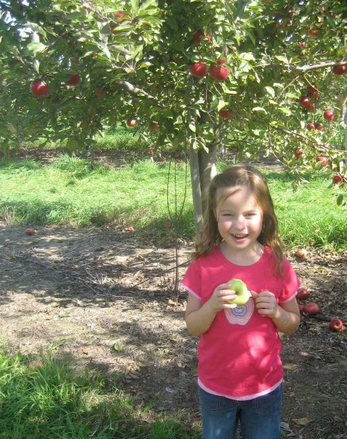 applepicking11